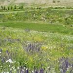 زمین فروشی شمال در دماوند اقساط و نقد